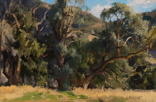 "American Legacy Fine Arts presents ""Eucalyptus in White Light"" a painting by Joseph Paquet."